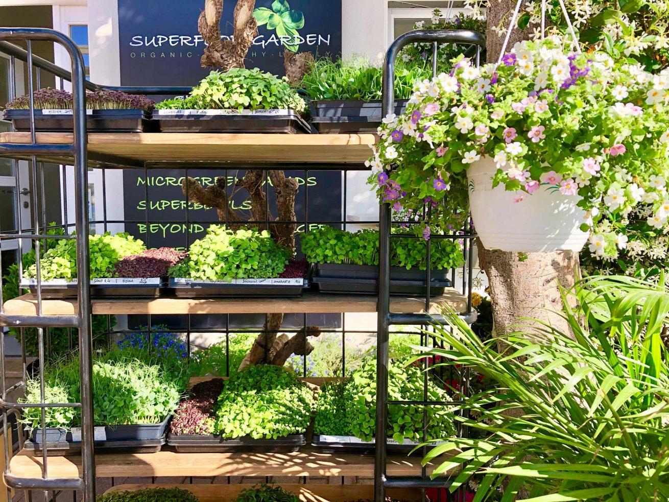 superfood-garden-restaurant-3