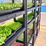 SUPERFOOD.GARDEN MICROGREENS
